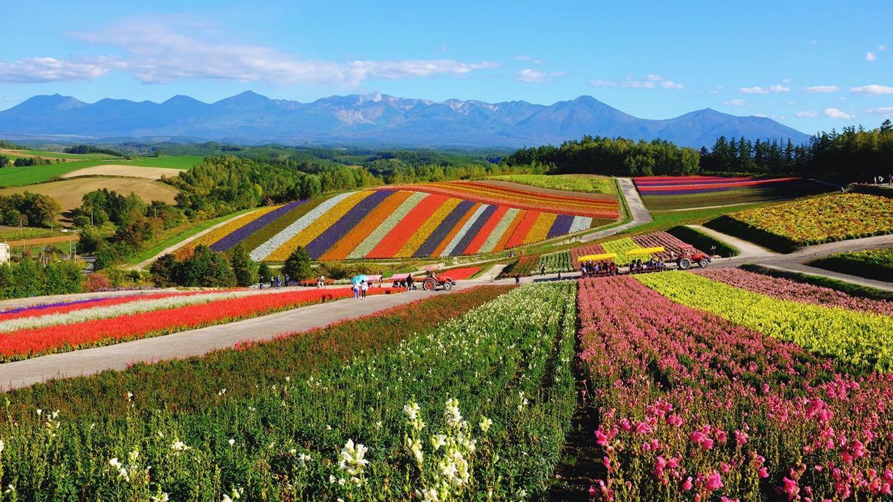 hokkaido_flowers
